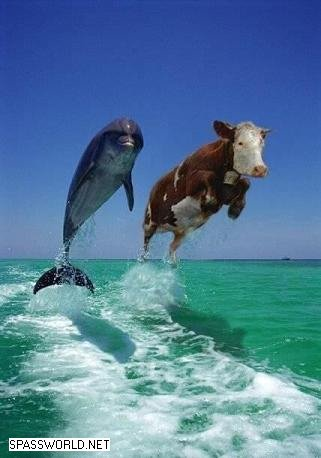 dolphincow.jpg